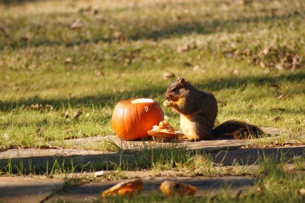 Feed pumpkin to wildlife