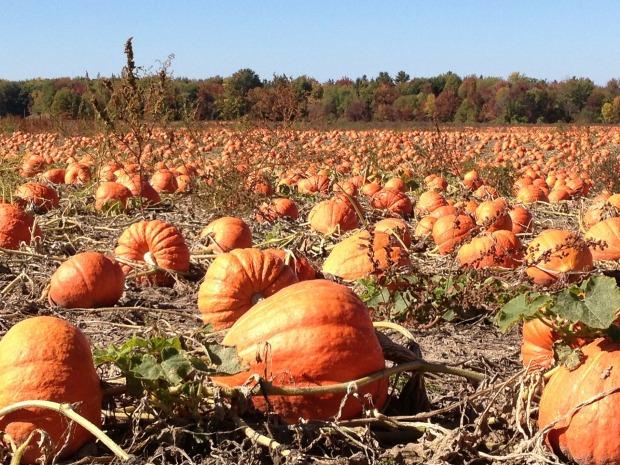 grow your own pumpkins.jpg